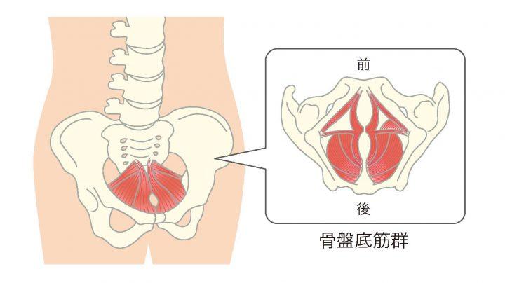 あなたの骨盤底筋力は大丈夫? 妊娠前からの骨盤底筋力の衰えが胎児の発育にも影響する – はぐふる
