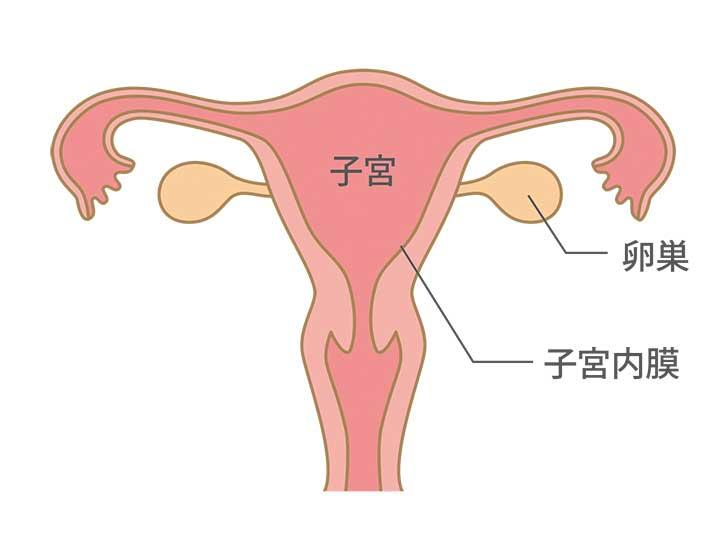 月経 生理 の仕組み はぐふる